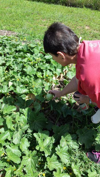 Good Roots Trainee DA & Watermelon